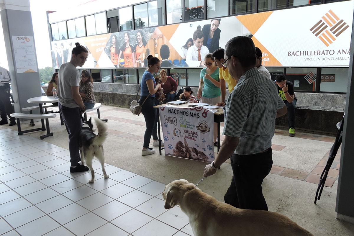1 / 7 - Grupo Ingenia en pro de la Vida Digna Animal Canina y Felina