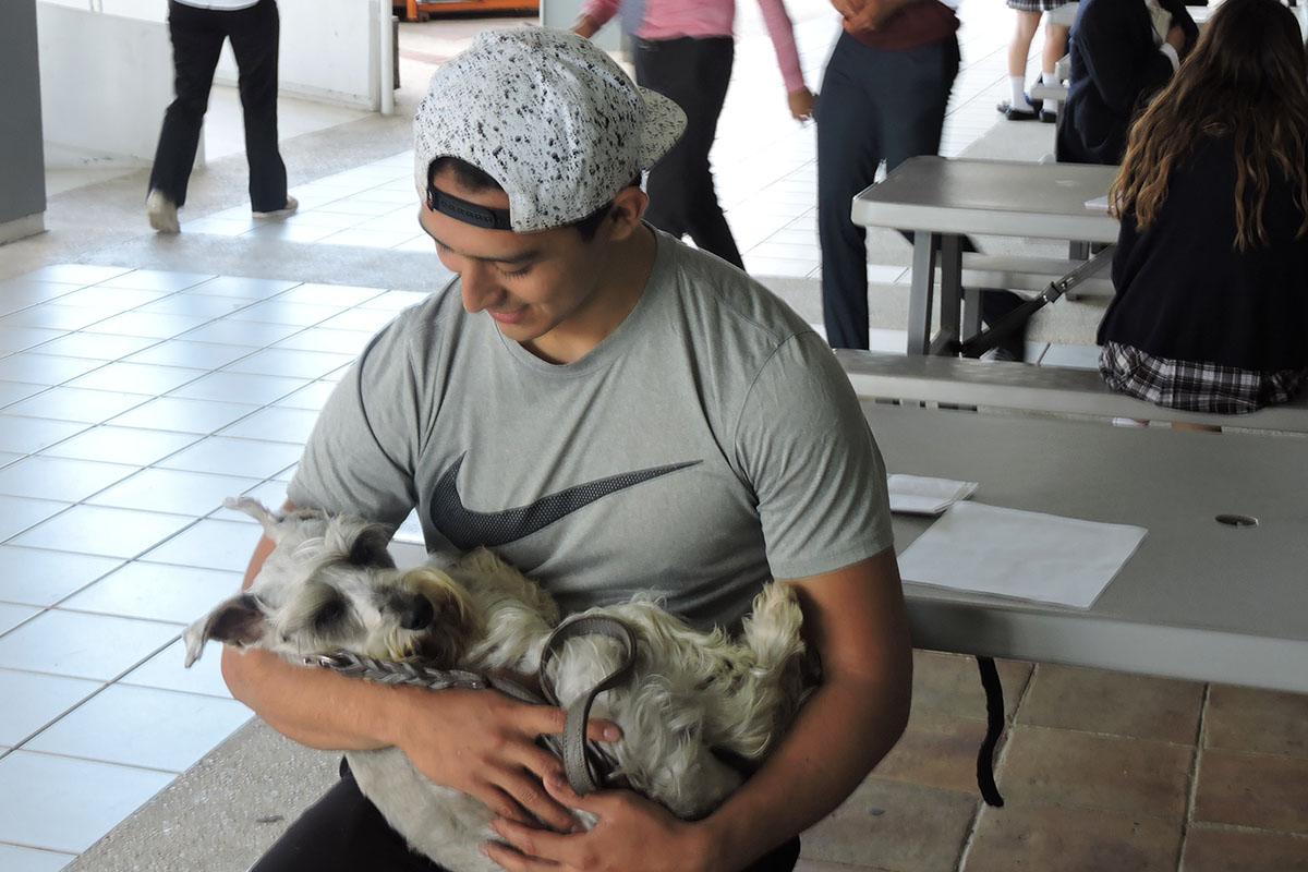 2 / 7 - Grupo Ingenia en pro de la Vida Digna Animal Canina y Felina