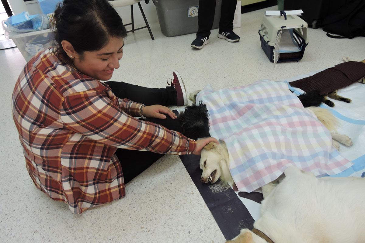 4 / 7 - Grupo Ingenia en pro de la Vida Digna Animal Canina y Felina