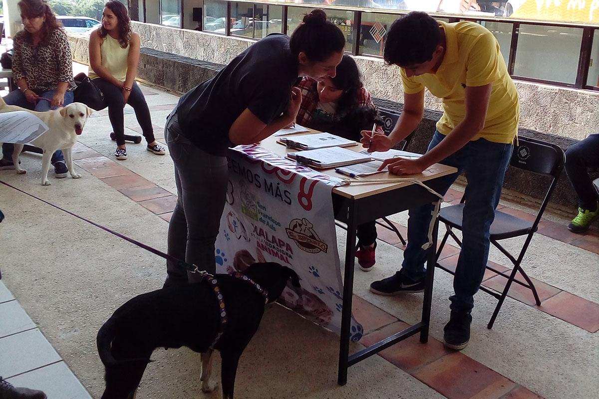 7 / 7 - Grupo Ingenia en pro de la Vida Digna Animal Canina y Felina