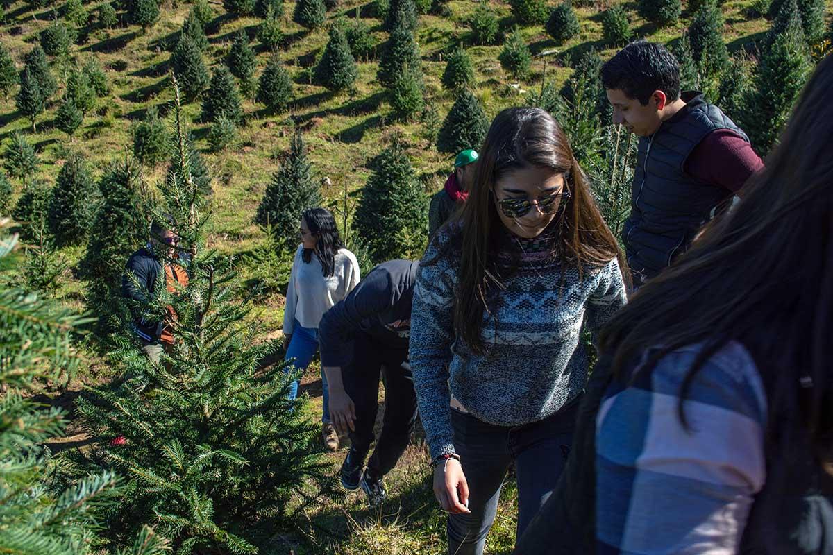 3 / 5 - En el parque Yerbabuena buscando el árbol de navidad.