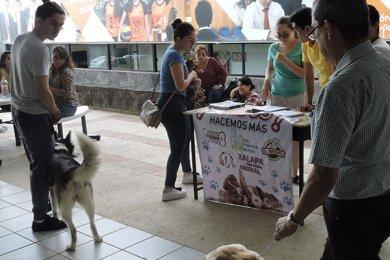 Grupo Ingenia en pro de la Vida Digna Animal Canina y Felina