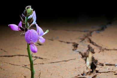 Resiliencia ante la Experiencia Inevitable del Duelo